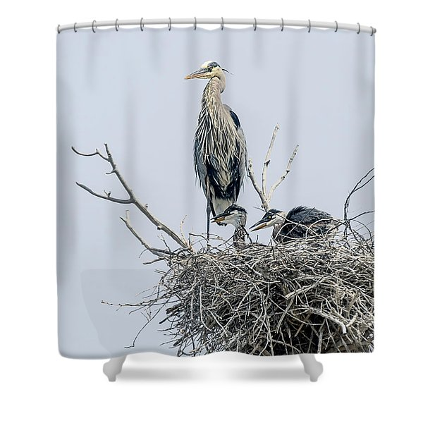 Great Blue Heron Rookery 3 Shower Curtain