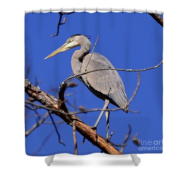 Great Blue Heron Strikes A Pose Shower Curtain