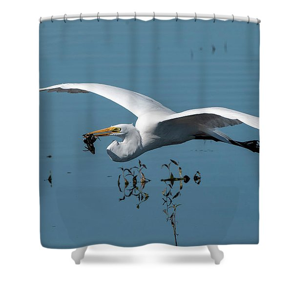 Great Egret Flying With Fish Shower Curtain