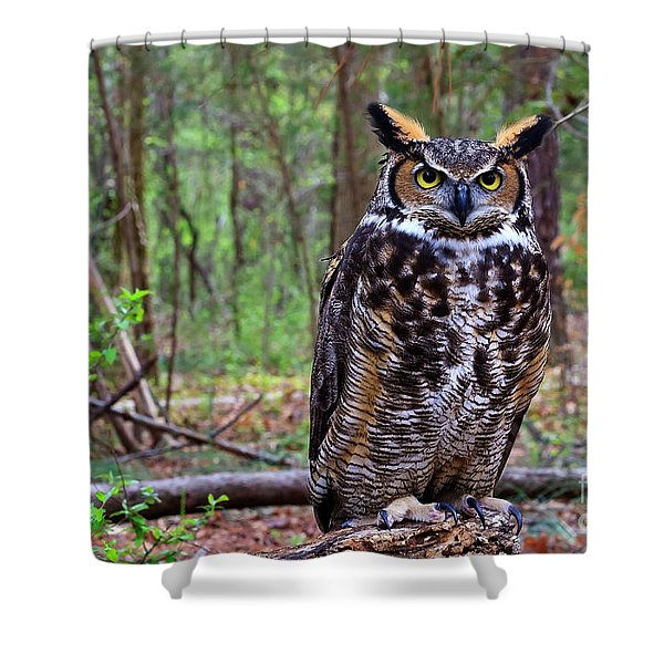 Great Horned Owl Standing On A Tree Log Shower Curtain