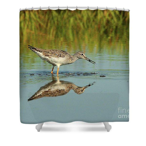 Greater Yellowlegs Shorebird Shower Curtain