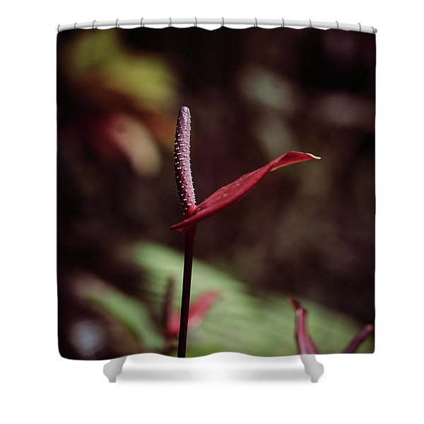 Shower Curtain featuring the photograph Greedy by Michelle Wermuth