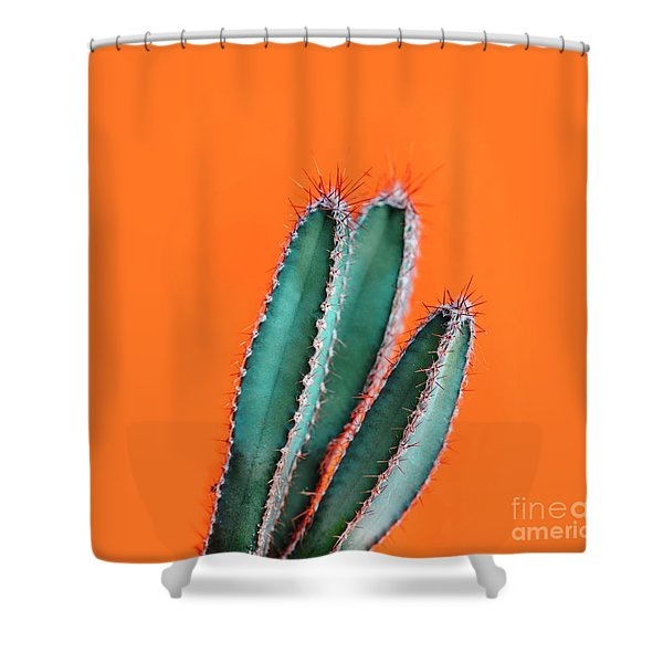 Green Cactus Closeup Over Bright Orange Pastel Background. Color Shower Curtain