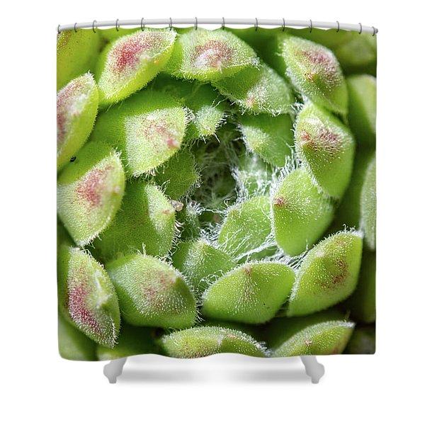 Shower Curtain featuring the photograph Green Sempervivum Top Down Close Up by Scott Lyons