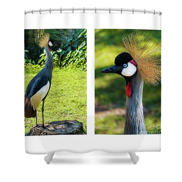 Grey Crowned Crane Gulf Shores Al Collage 10 Diptych Shower Curtain