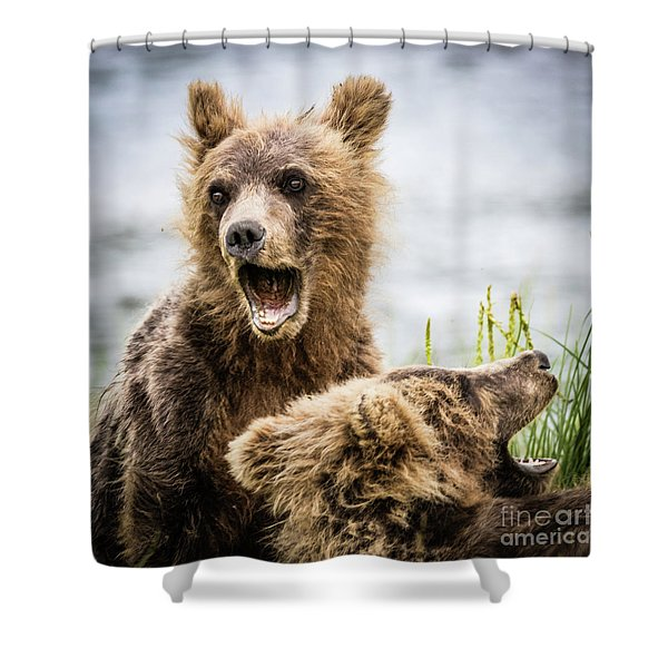 Grizzly Cubs Looking For Their Mum Shower Curtain