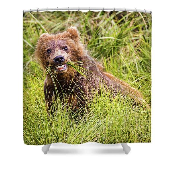 Grizzly Cub Grazing, Alaska Shower Curtain