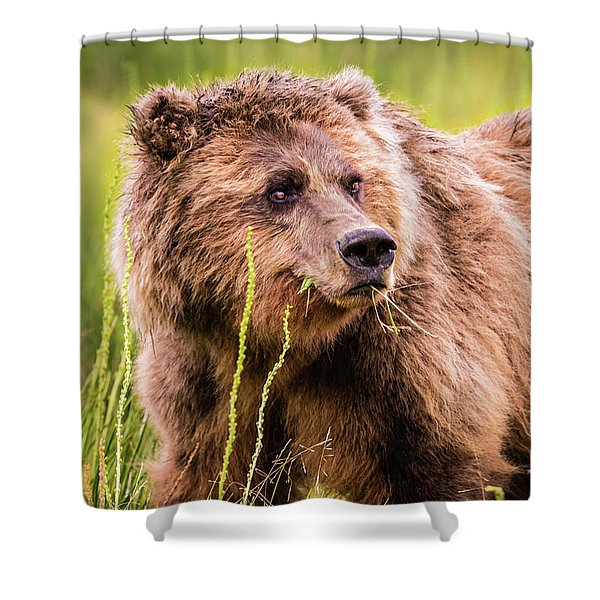 Grizzly In Lake Clark National Park, Alaska Shower Curtain