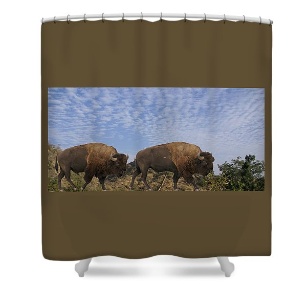 Group Of Bison Walking Against Rocky Mountains  Shower Curtain