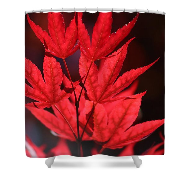 Guardsman Red Japanese Maple Leaves Shower Curtain