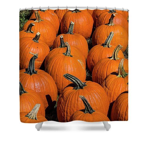Halloween Harvest Shower Curtain