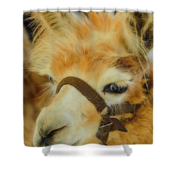 Happy Alpaca Shower Curtain