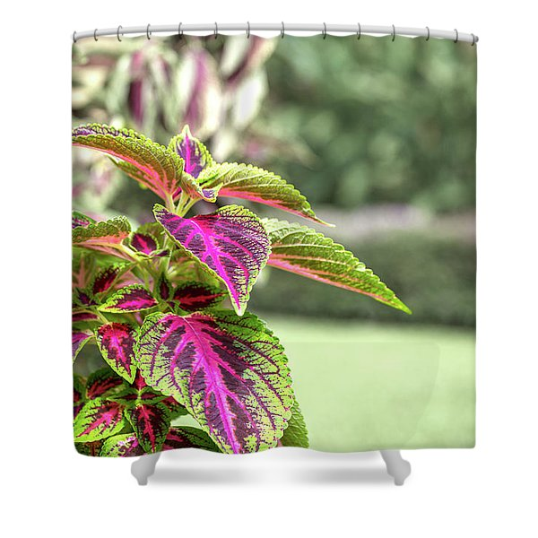 Happy Coleus Costa Rica Plant Shower Curtain