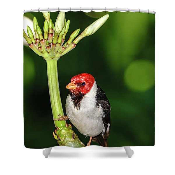 Happy Valentine's Day Bird Shower Curtain