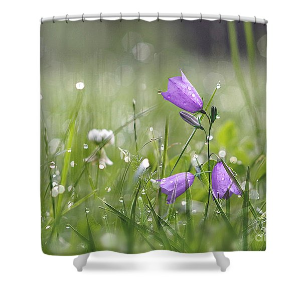Harebells And Water Drops Shower Curtain