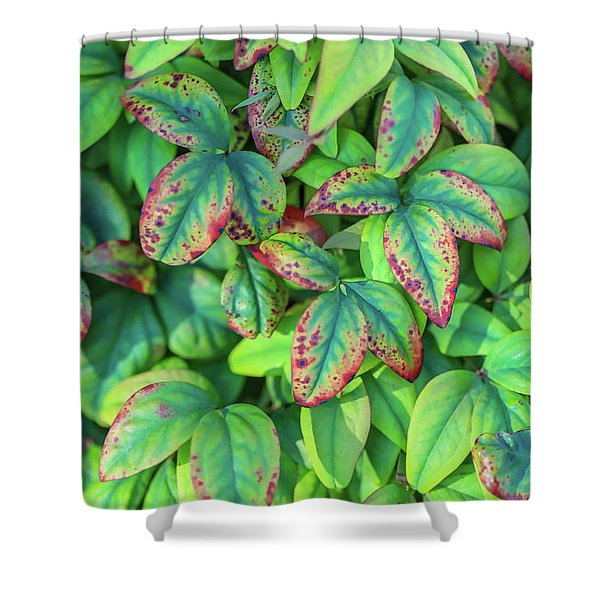 Harmony In The Garden Shower Curtain