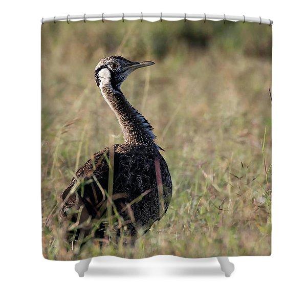 Black-bellied Bustard Shower Curtain