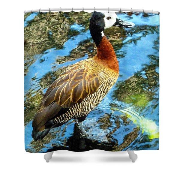 Hawaiian Duck Shower Curtain