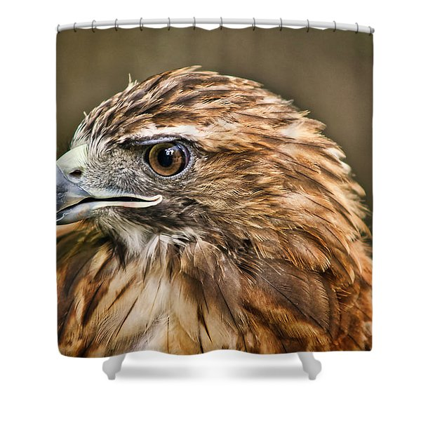 Shower Curtain featuring the photograph Red-tailed Hawk by Meta Gatschenberger