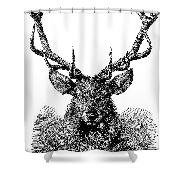 Head Of Red Deer, In Which The Antler Is Fully Developed And The Velvet Has Disappeared  Shower Curtain