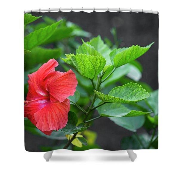 Heartwarming Hibiscus  Shower Curtain