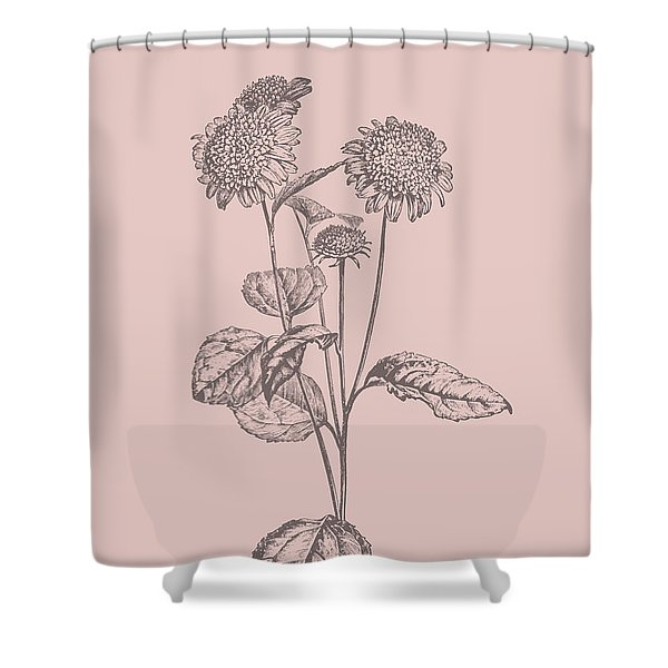 Helianthus Blush Pink Flower Shower Curtain
