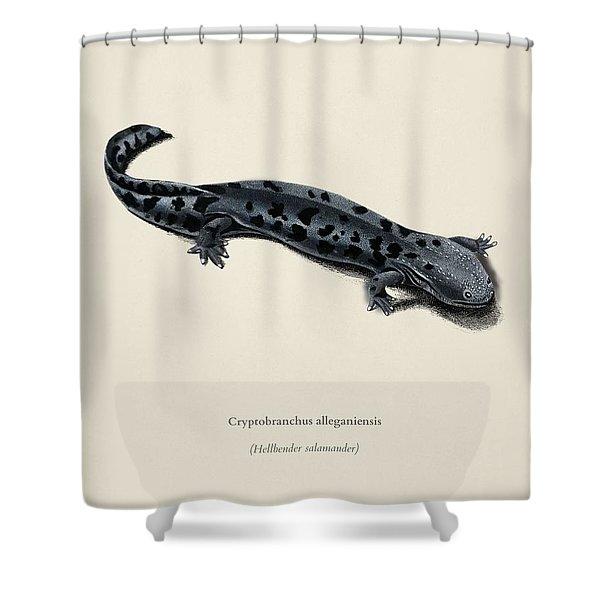 Hellbender Salamander  Cryptobanchus Alleganiernsis Illustrated By Charles Dessalines D Orbigny  1 Shower Curtain