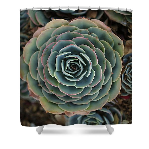 Hen And Chicks Succulent Shower Curtain