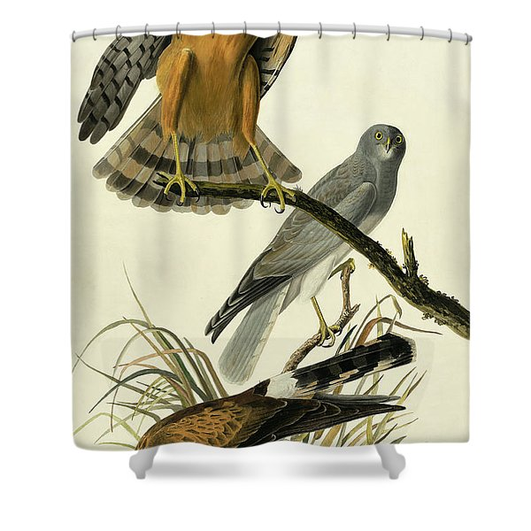 Hen Harrier, Circus Cyaneus By Audubon Shower Curtain