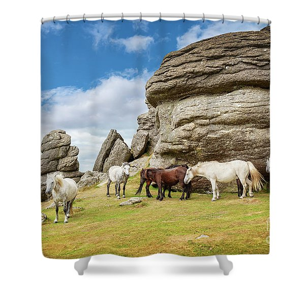 Herd Of Dartmoor Ponies Shower Curtain