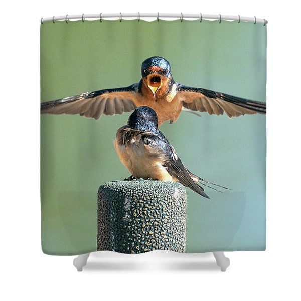 Hey, Babe, Let's Rock N Roll.  Barn Swallows Shower Curtain