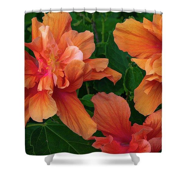 Hibiscus Tripcus Orangus Shower Curtain