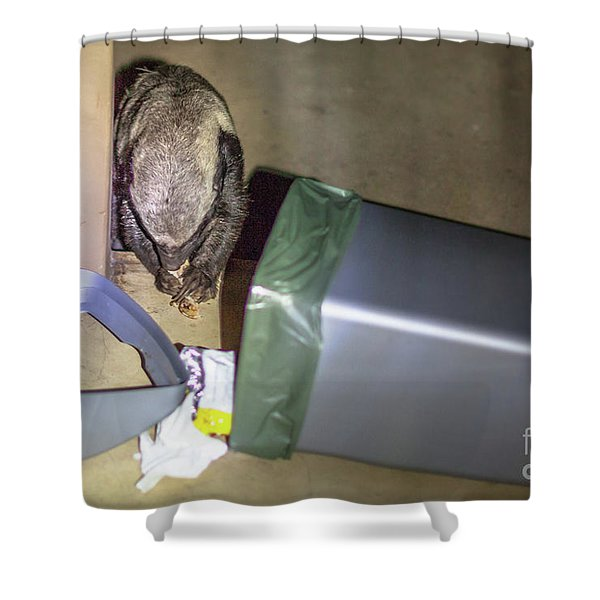 Honey Badger Of South Africa Shower Curtain
