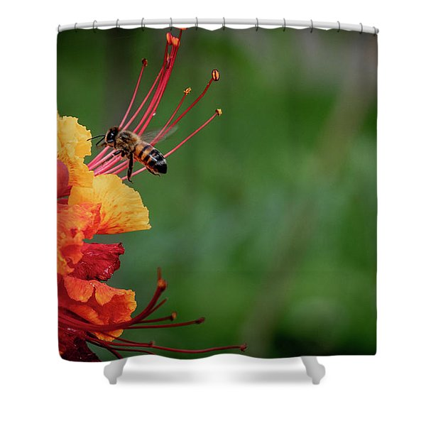 Honey Bee Extraction Shower Curtain