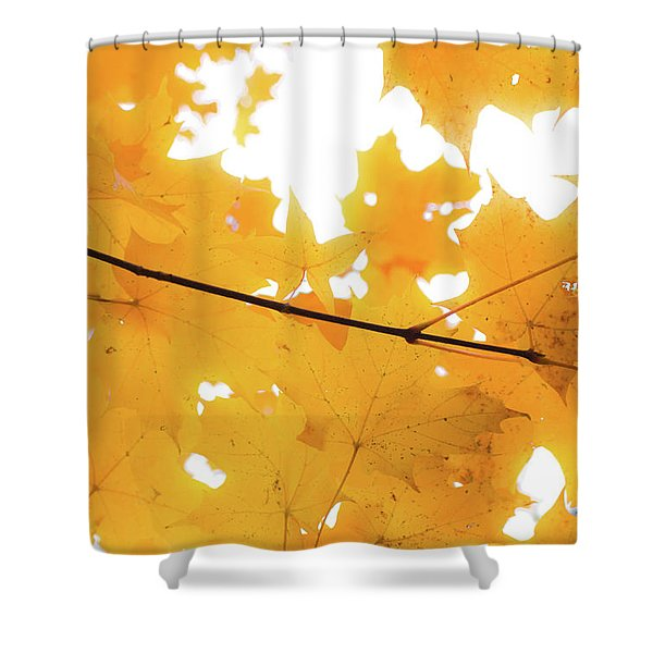 Honey Colored Happiness Shower Curtain