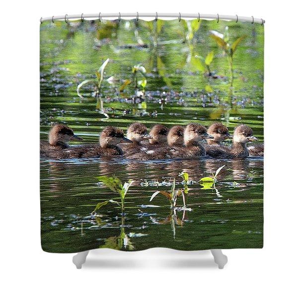 Hooded Merganser Ducklings Dwf0203 Shower Curtain