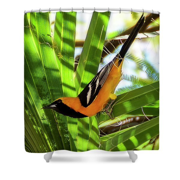 Hooded Oriole V1912 Shower Curtain