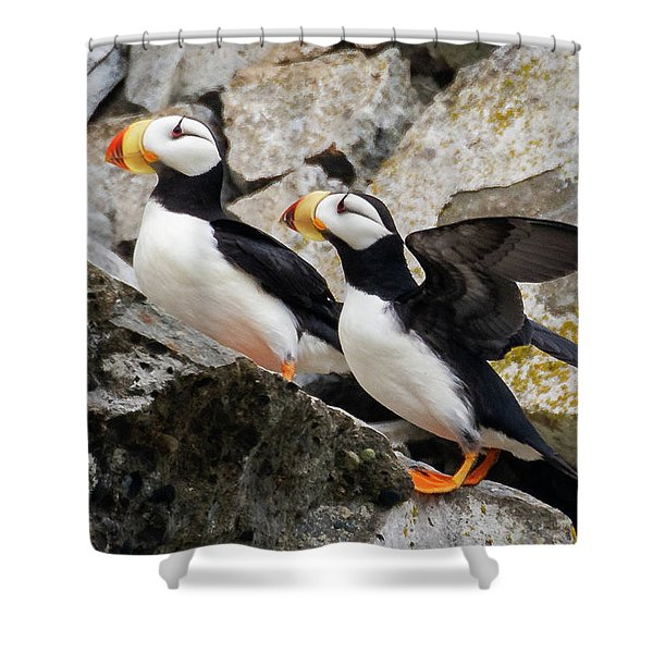 Horned Puffin Pair Shower Curtain
