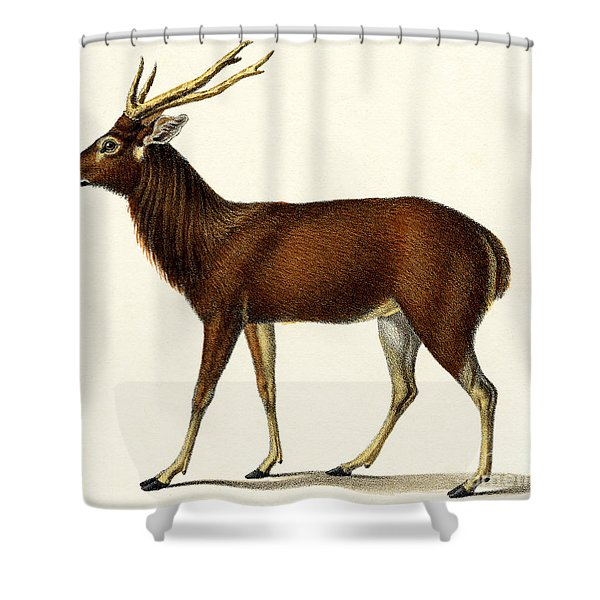 Horned Red Deer, 1824 Color Lithograph Shower Curtain