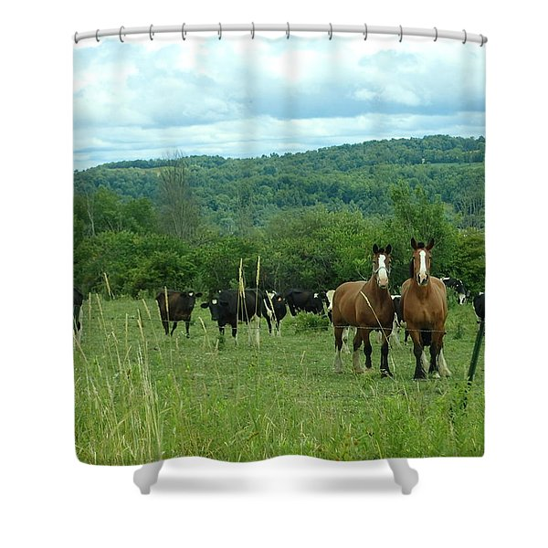 Horse And Cow Shower Curtain