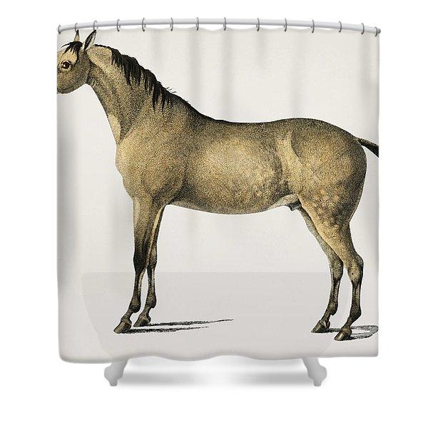 Horse  Equus Ferus Caballus Illustrated By Charles Dessalines D' Orbigny  1806-1876 2 Shower Curtain