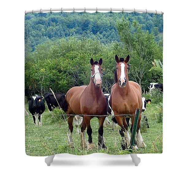 Horses And Cows.  Shower Curtain