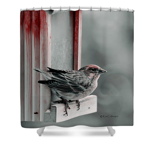 House Finch On Feeder Shower Curtain