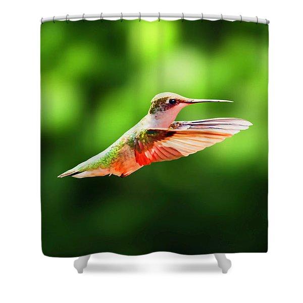 Hummingbird Flying Shower Curtain