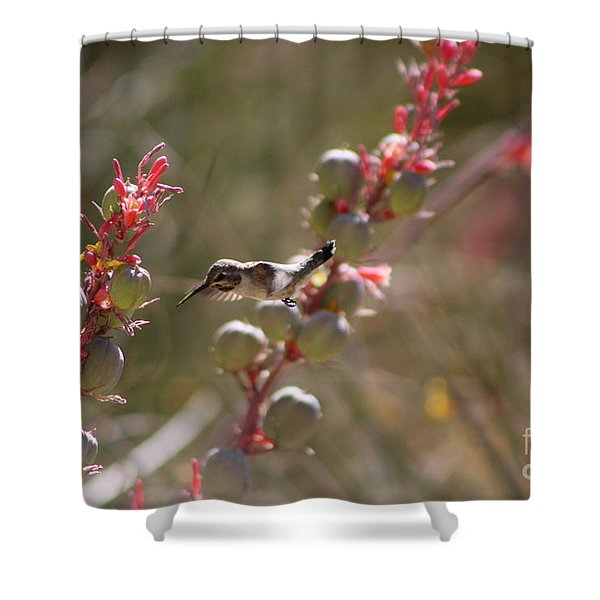 Hummingbird Flying To Red Yucca 1 In 3 Shower Curtain