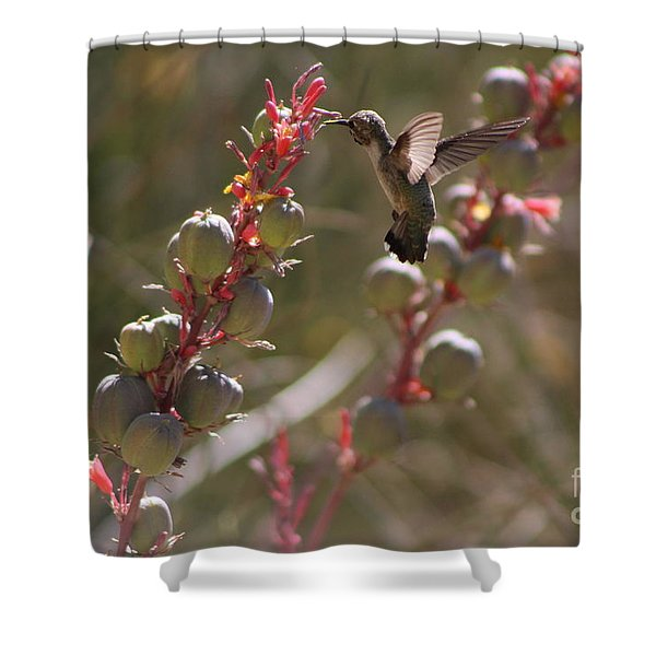 Hummingbird Flying To Red Yucca 3 In 3 Shower Curtain