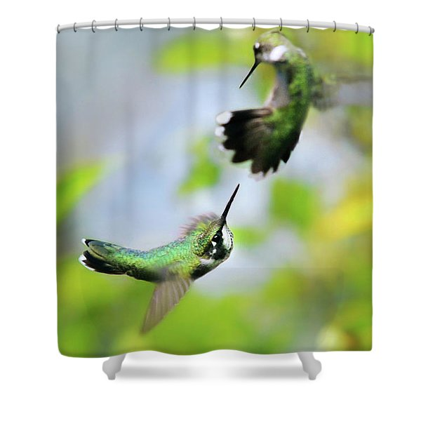 Hummingbirds Ensuing Battle Shower Curtain