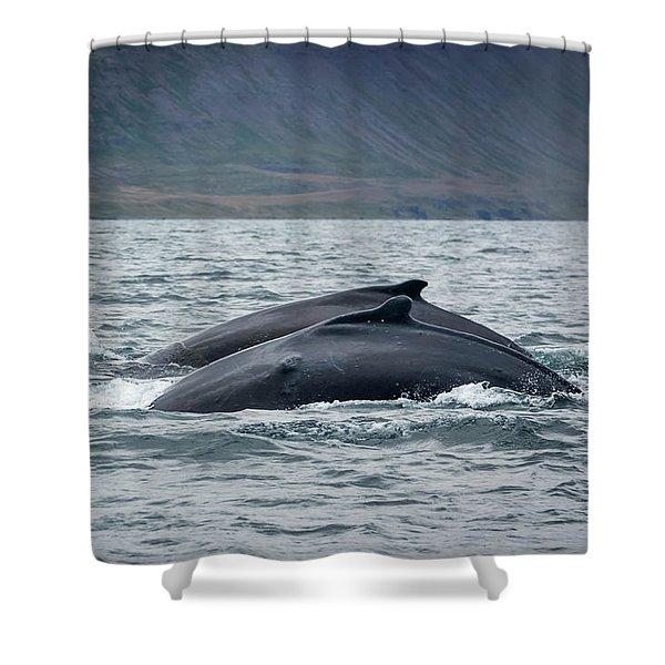 Humpback 7 Shower Curtain