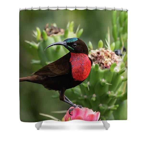 Hunter's Sunbird Shower Curtain