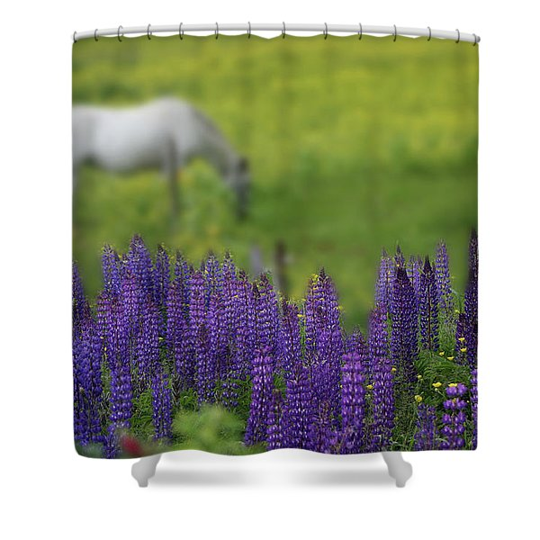 Shower Curtain featuring the photograph I Dreamed A Horse Among Lupine by Wayne King